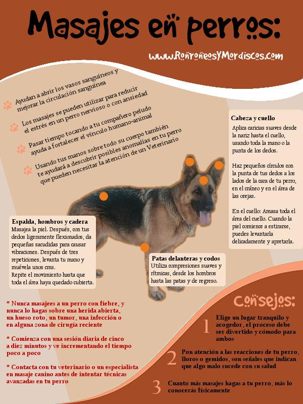 Masajes en perros