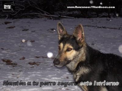 Nana invierno